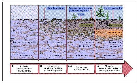 Charcotoapantadiana tema 8 for Suelos y tipos de suelos