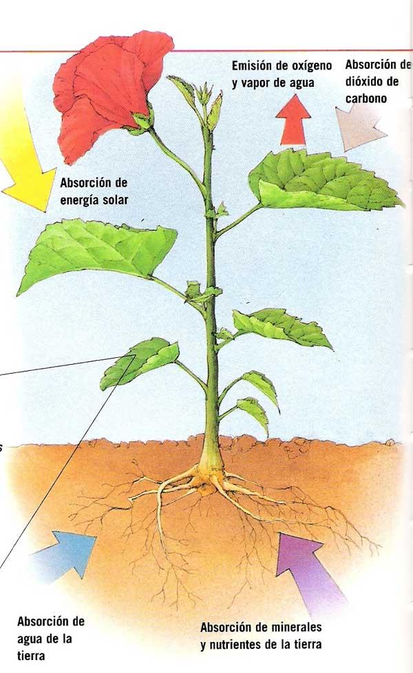 Charcotoapantadiana tema 2 for Para que se utilizan las plantas ornamentales